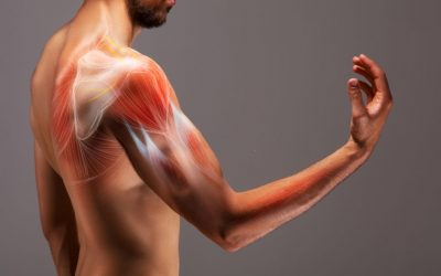 Testing Points In A Nutshell- Musculoskeletal
